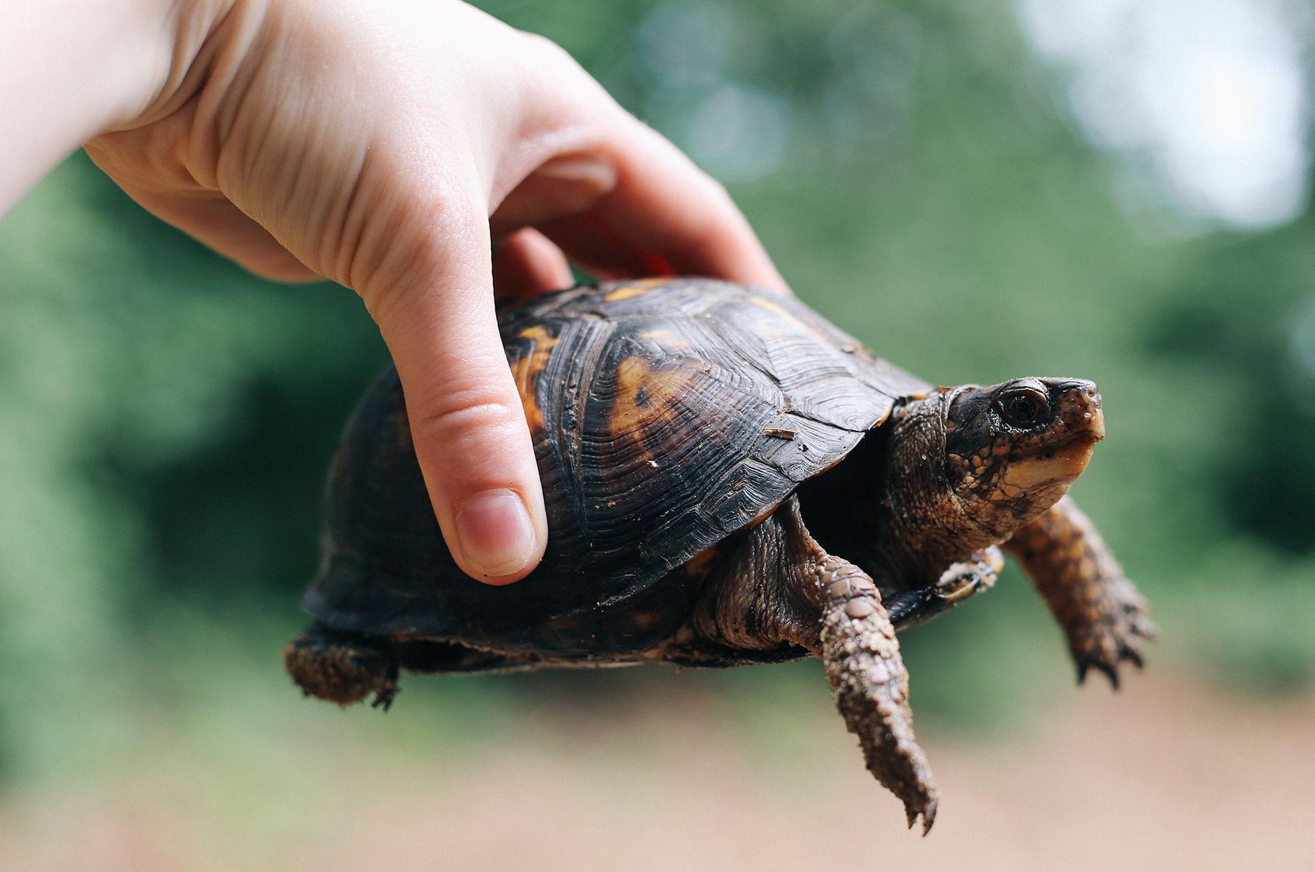 spring_turtle